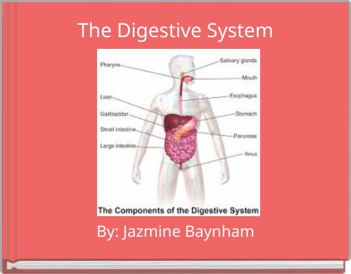 journey through the digestive system essay Continue the capsule journey through the digestive system observing the colon a journey through the intestine - teacher's guide (human biology.