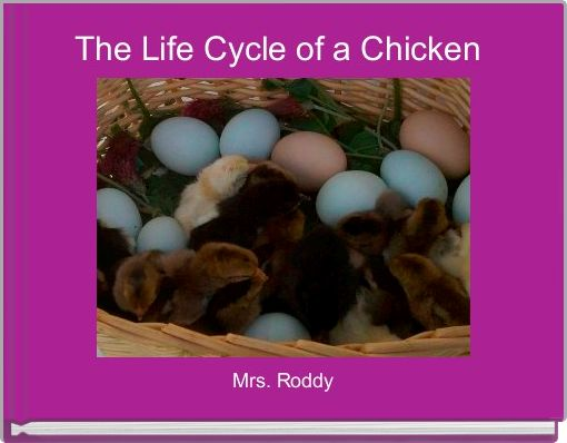The Life Cycle of a Chicken