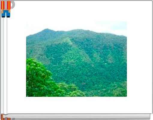 The Jungle Alphabet