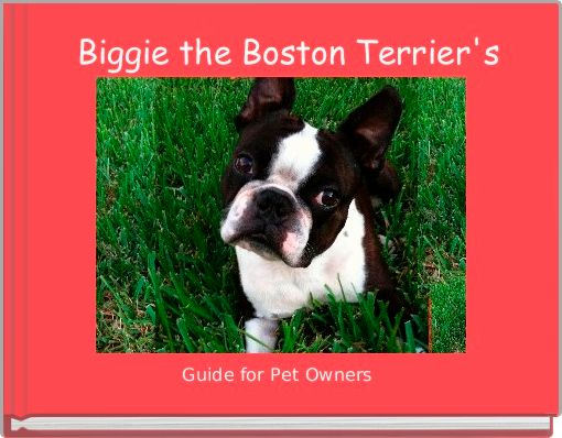 Biggie the Boston Terrier's