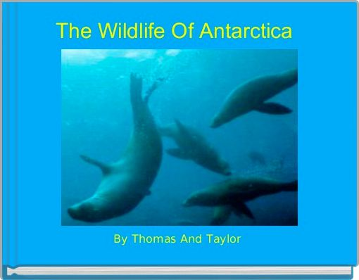 The Wildlife Of Antarctica