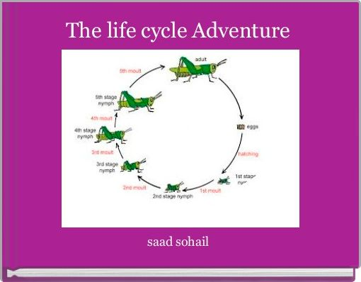 The life cycle Adventure