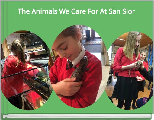 The Animals We Care For At San Sior