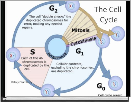 U0026quot The Cell Cycle U0026quot