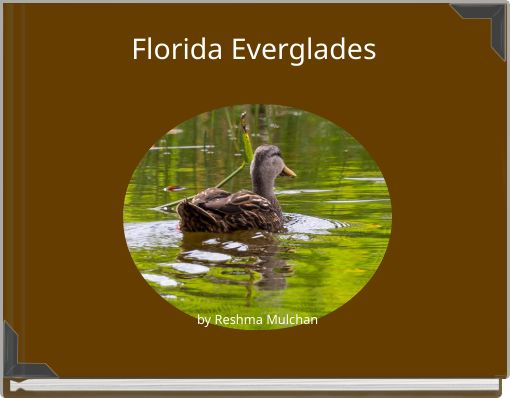 Florida Everglades by Reshma Mulchan