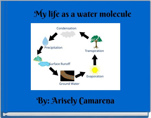 My life as a water molecule