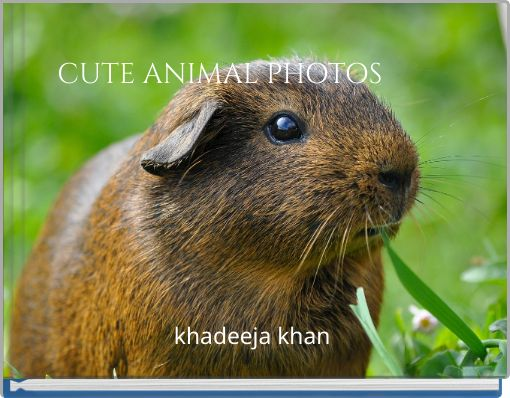 CUTE ANIMAL PHOTOS