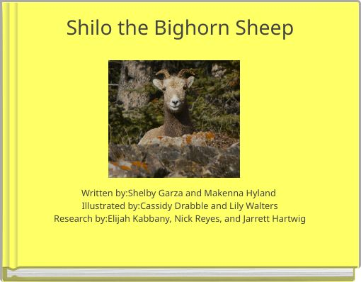 Shilo the Bighorn Sheep