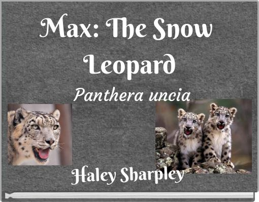 Max: The Snow Leopard Panthera uncia