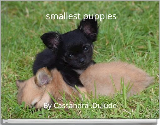 smallest puppies