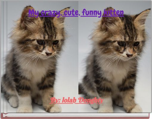 My crazy, cute, funny kitten