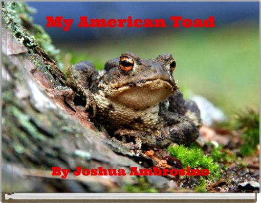 My American Toad