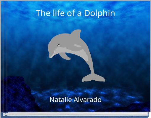 The life of a Dolphin