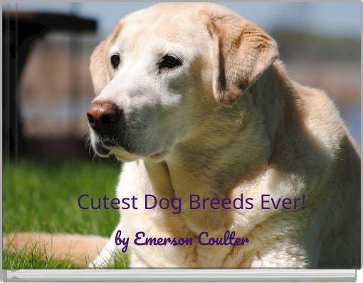 Cutest Dog Breeds Ever!