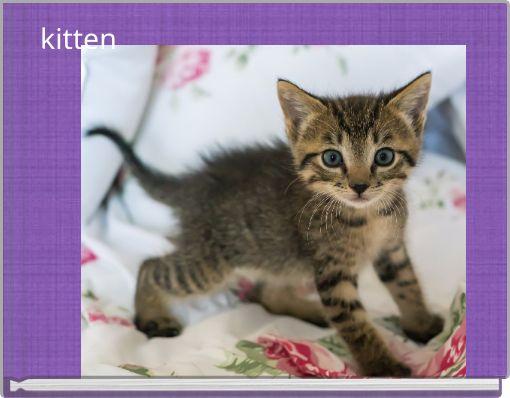 kitten by anna