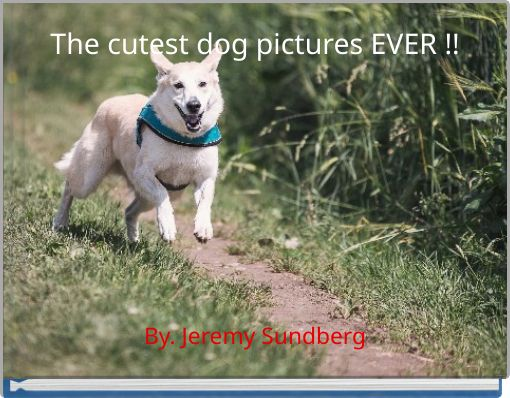 The cutest dog pictures EVER !!