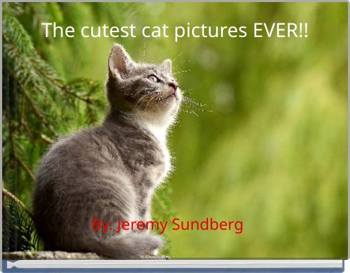 The cutest cat pictures EVER!!