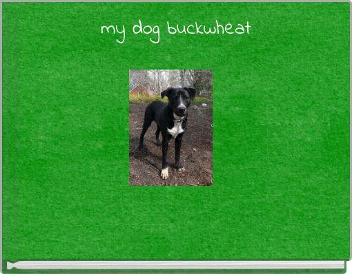 my dog buckwheat