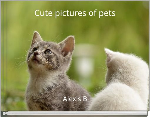 Cute pictures of pets