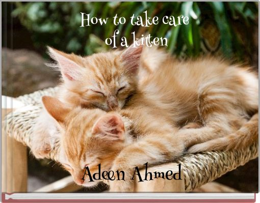 How to take care of a kitten