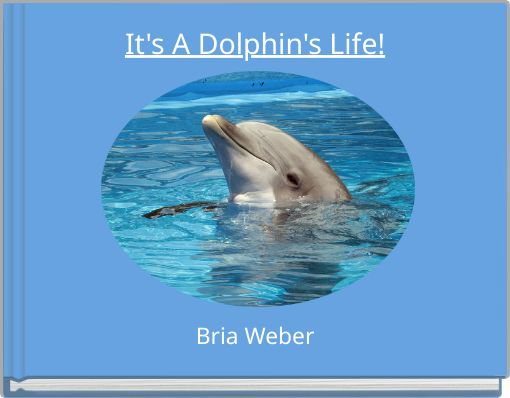 It's A Dolphin's Life!