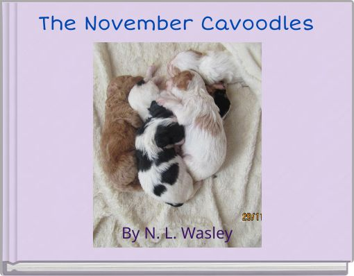 The November Cavoodles